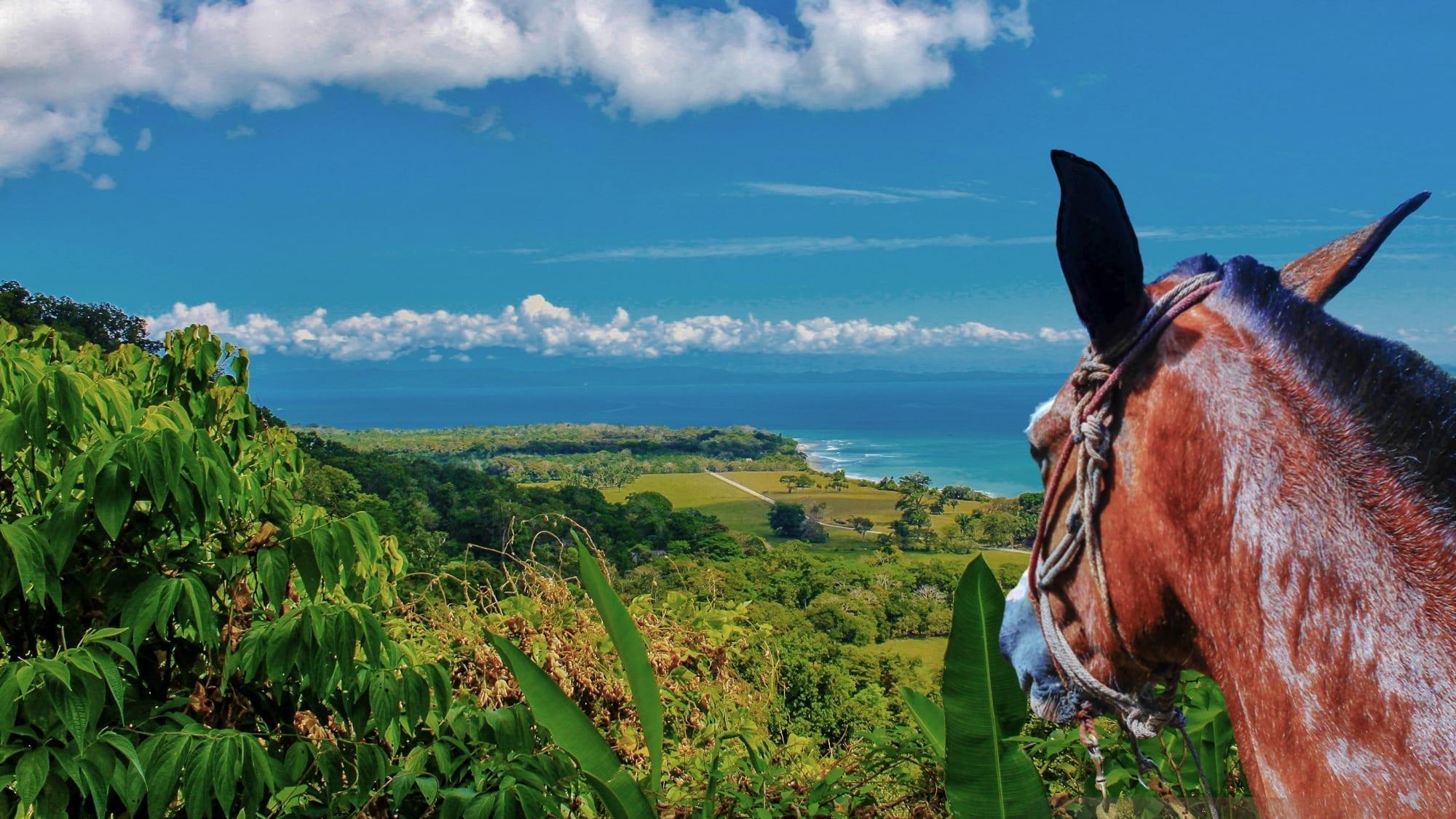 ¡Tour a caballo, rapel en catarata, escalada en árboles y mucho más!