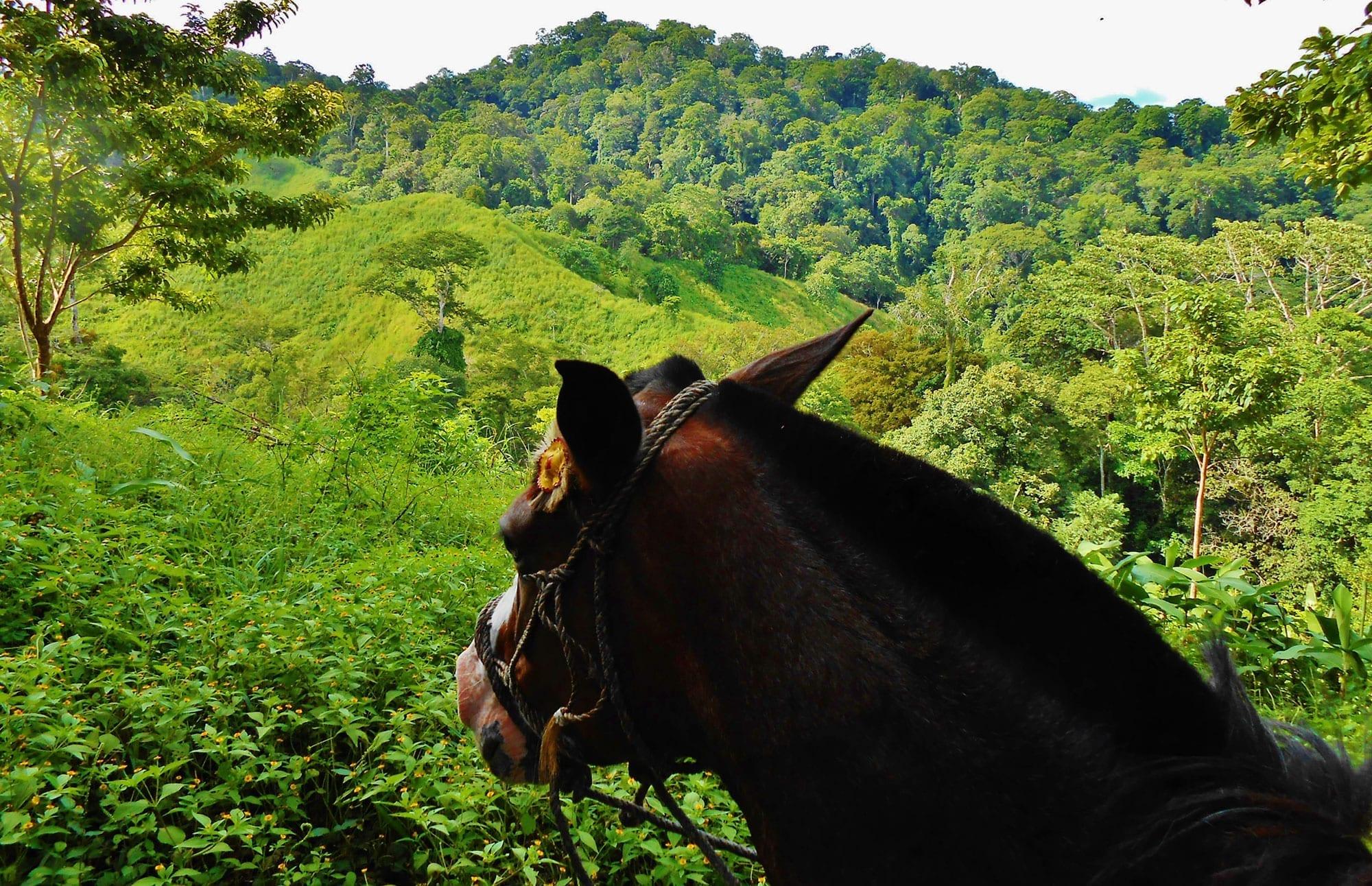 home-Horseback-Riding-2