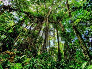 Rainforest Corcovado National Park