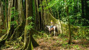 Horseback Riding Osa Peninsula, Costa Rica